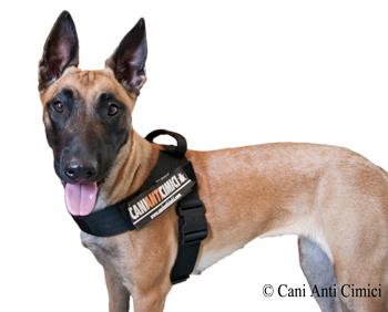 Cani Anti Cimici
