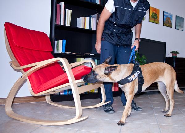 Lo dice la Scienza: i cani anti cimici aiutano il dermatologo