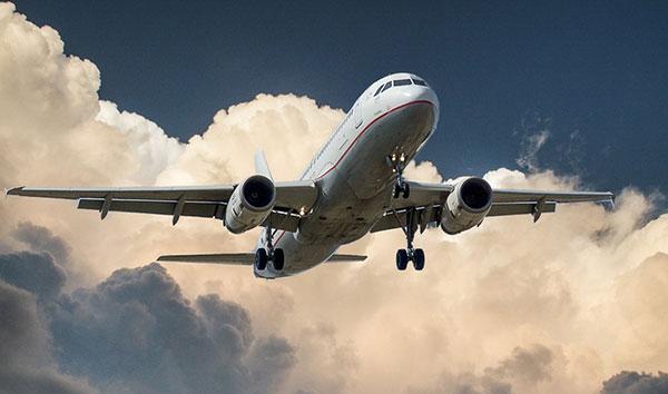 Cimici da letto negli aerei, solo i cani anti cimici possono stanarle